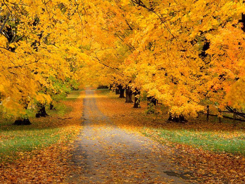 Autumn-Wallpaper-2